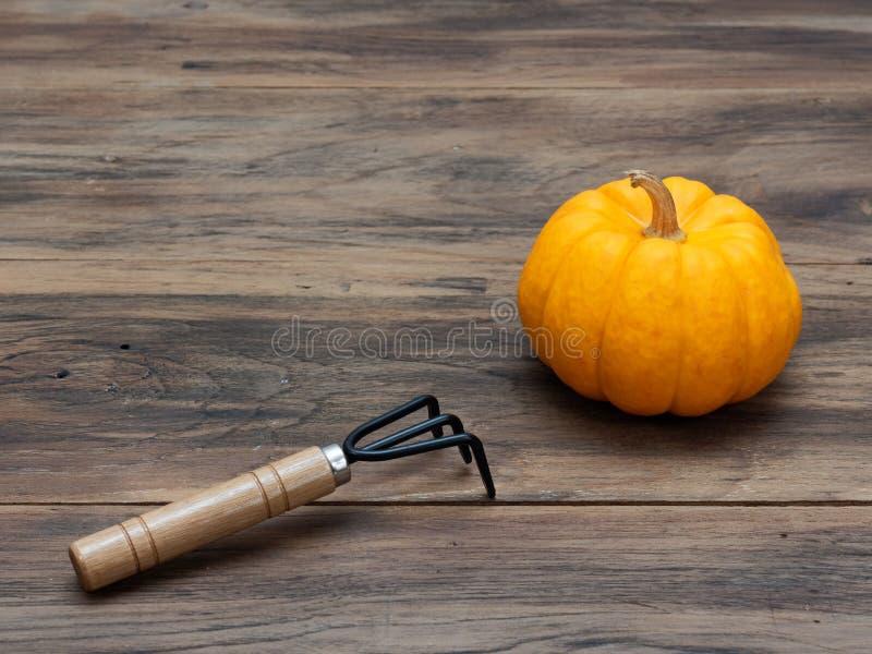 Calabaza orgánica de lujo anaranjada brillante con el cultivador en fondo de madera oscuro de la tabla imagen de archivo
