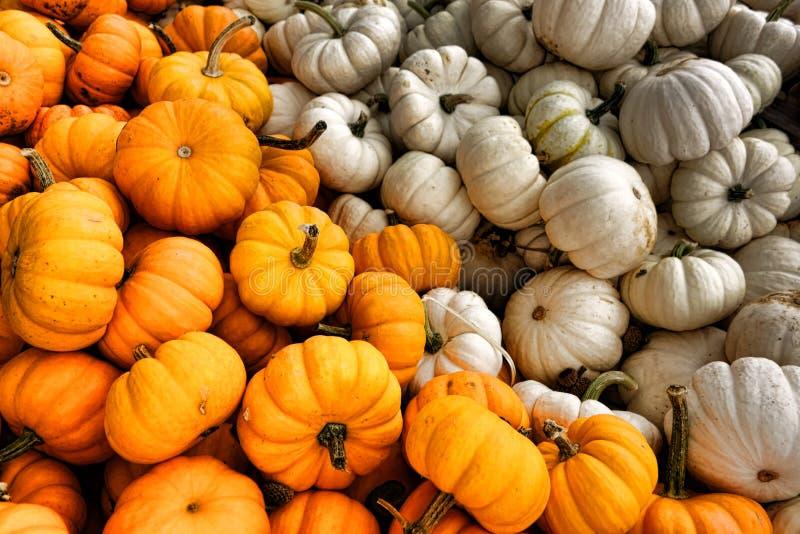 Calabaza para la exhibición de la venta para Halloween y la caída fotos de archivo