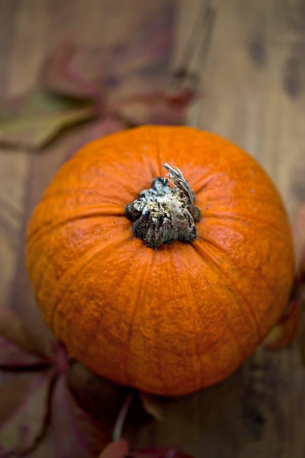 Calabaza roja del capricho del otoño fotos de archivo