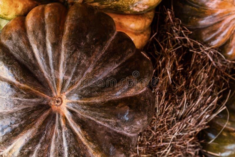 Calabaza verde oscuro con la cosecha acanalada gris y marrón del otoño del diseño del primer de las tonalidades fotos de archivo