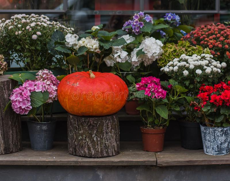Calabaza y flores en macetas imagen de archivo