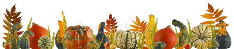 Calabaza y fondo coloridos del otoño de las hojas stock de ilustración