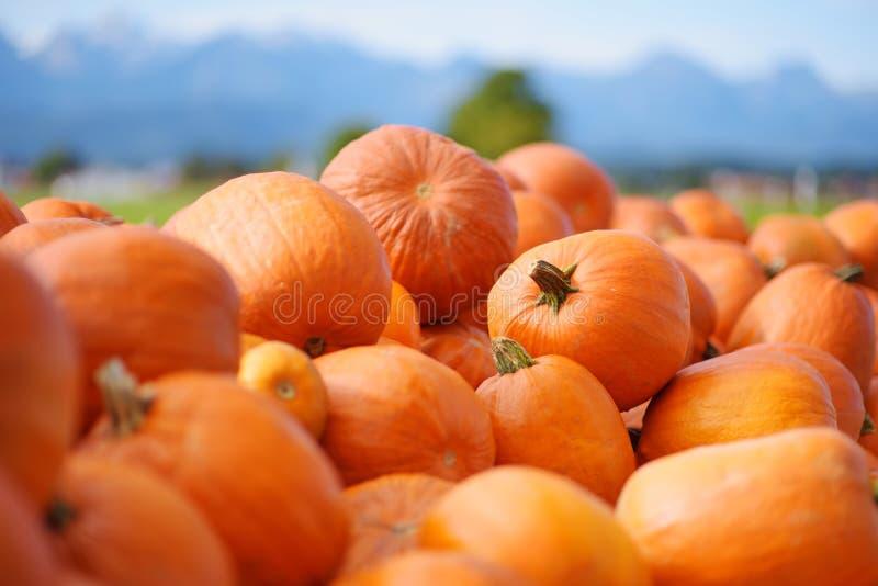 Calabazas anaranjadas decorativas en la exhibición en el mercado de los granjeros en Alemania Calabazas ornamentales anaranjadas  imagen de archivo