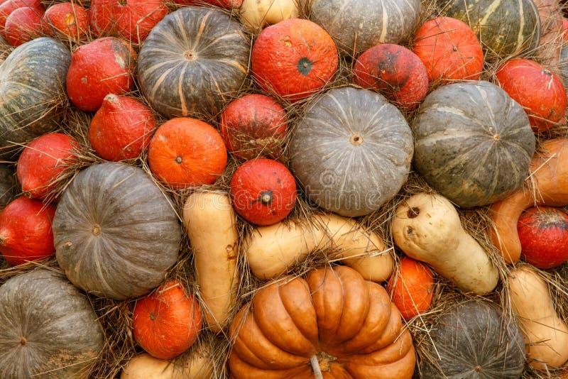 Calabazas anaranjadas en la exhibición en el mercado de los granjeros Concepto de la cosecha y de la acción de gracias fotografía de archivo libre de regalías