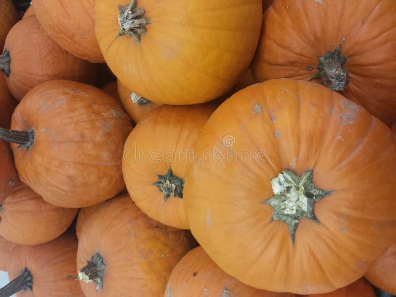 Calabazas anaranjadas para la venta en el mercado vegetal fotografía de archivo