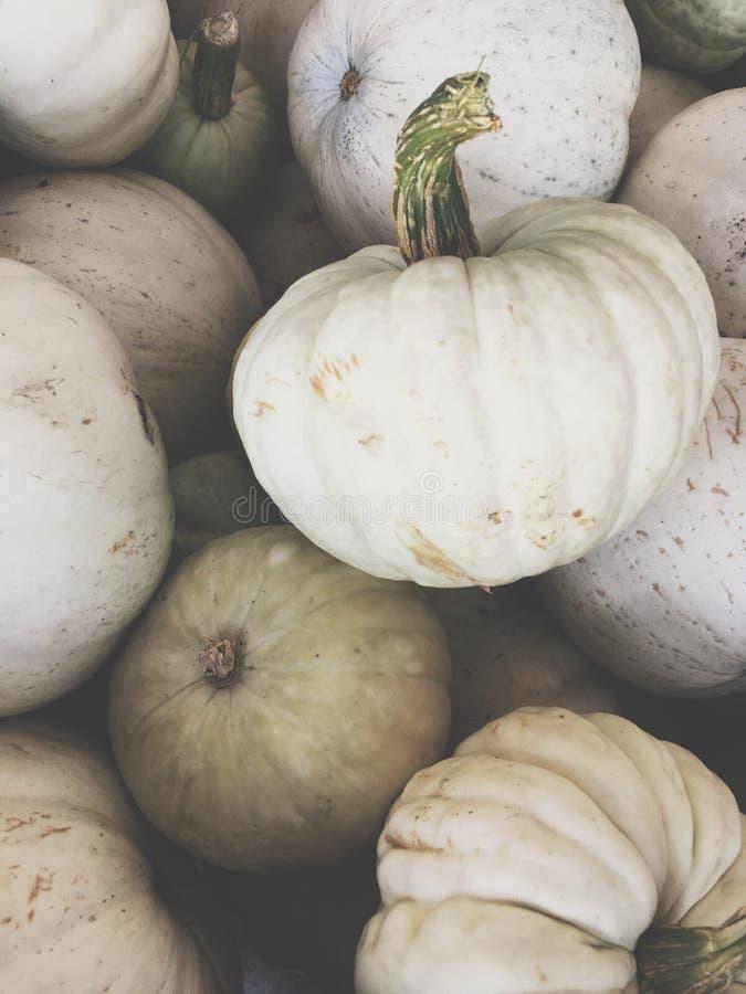 Calabazas blancas para Halloween imagen de archivo libre de regalías
