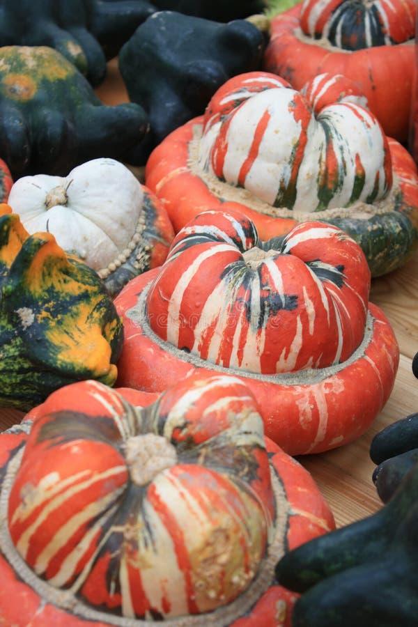 Calabazas, calabaza de turbante en el festival de la cosecha fotos de archivo