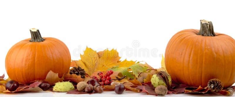 Calabazas con las hojas de otoño para el día de la acción de gracias en el fondo blanco imágenes de archivo libres de regalías