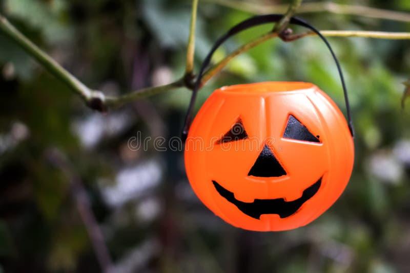 Calabazas de Halloween en la madera en un bosque fantasmagórico fotografía de archivo libre de regalías