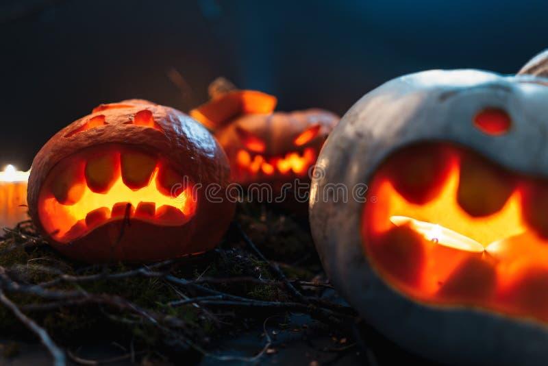 Calabazas de Halloween en un bosque fantasmagórico en la noche fotografía de archivo