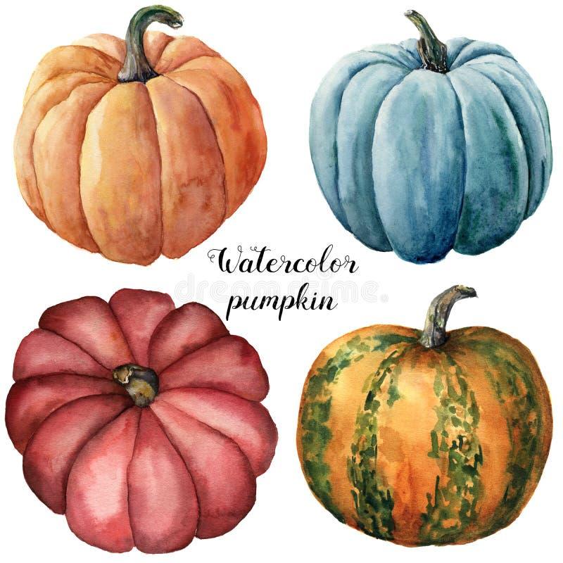 Calabazas de la acuarela Rojo, azul pintado a mano, anaranjado y anaranjado con verde raya las calabazas aisladas en el fondo bla stock de ilustración