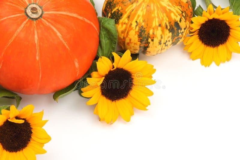 Calabazas de la cosecha con el girasol imagen de archivo libre de regalías