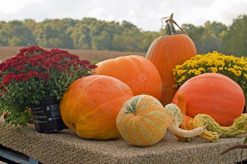 Calabazas de otoño fotos de archivo