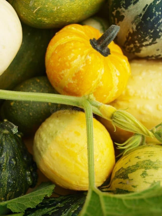 Download Calabazas del color foto de archivo. Imagen de otoño - 44853696