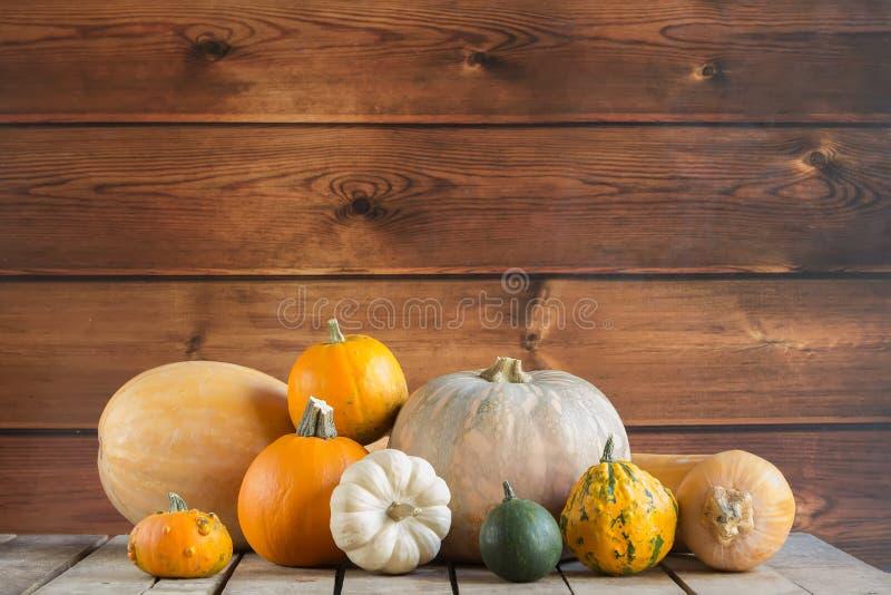 Calabazas en el fondo de madera, espacio de la copia para el texto Día de Halloween, de la acción de gracias u otoñal estacional  imagen de archivo libre de regalías