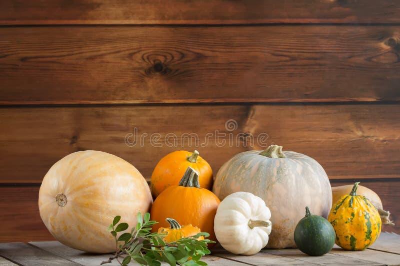 Calabazas en el fondo de madera, espacio de la copia para el texto Día de Halloween, de la acción de gracias u otoñal estacional  imagenes de archivo