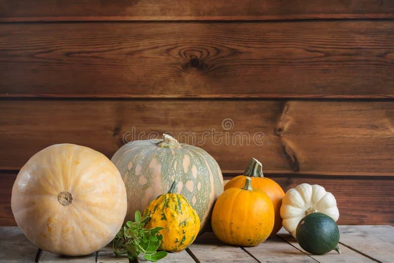 Calabazas en el fondo de madera, espacio de la copia para el texto Día de Halloween, de la acción de gracias u otoñal estacional  foto de archivo libre de regalías