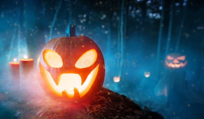 Calabazas fantasmagóricas de Halloween en bosque fotografía de archivo