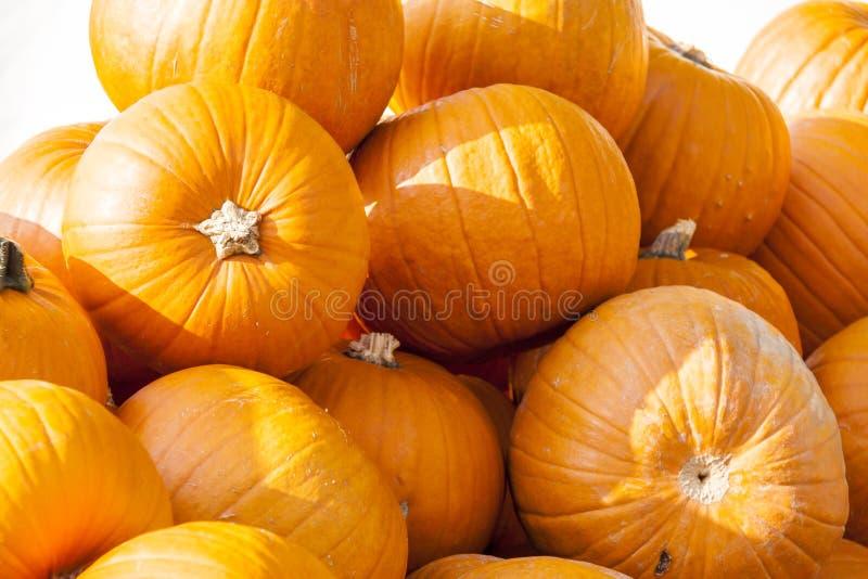 Calabazas grandes de la calabaza del cucurbita de Halloween Halloween a partir del otoño h foto de archivo