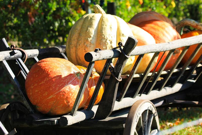 Calabazas grandes en el carro de madera antiguo viejo aislado del carro en sol brillante del otoño en un prado de una granja rura imágenes de archivo libres de regalías