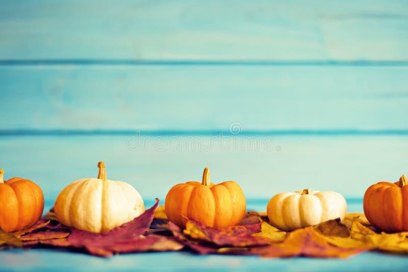 Calabazas sobre las hojas del otoño imagenes de archivo