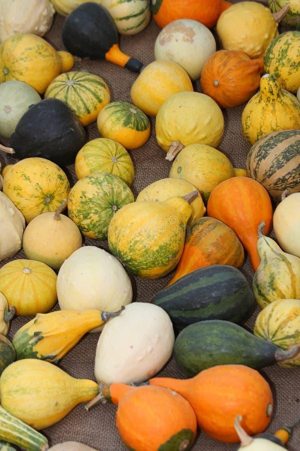 Calabazas verdes y anaranjadas en venta en el mercado foto de archivo libre de regalías