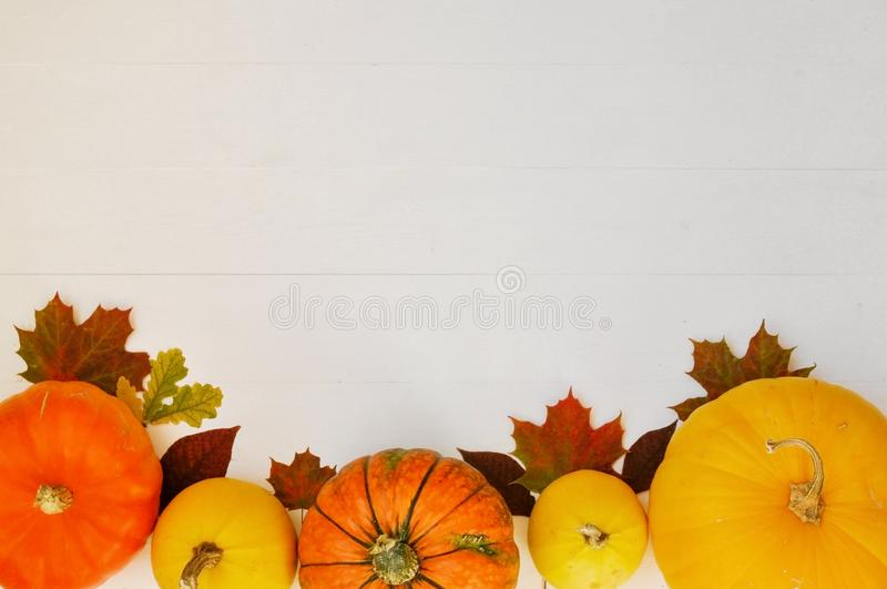 Calabazas y hojas de otoño amarillas y anaranjadas en el fondo de madera blanco para la caída de la cosecha y el tema de la acció imágenes de archivo libres de regalías