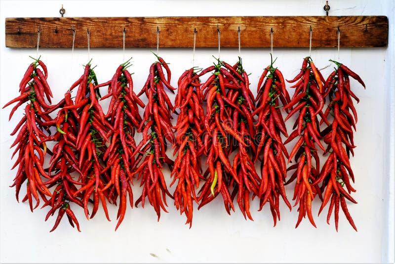 Calabrian varm chili som peppersdrying i solen royaltyfri bild