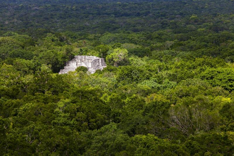 Calakmul стоковое фото