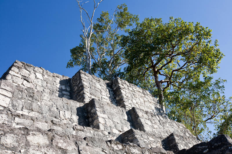 Calakmul - ancient mayan city in Mexico stock image
