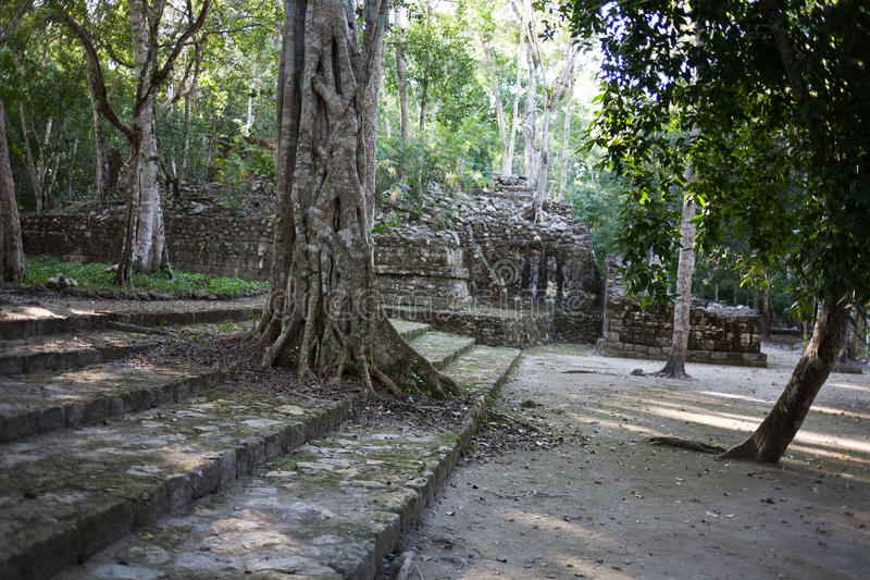 Calakmul - ancient mayan city in Mexico stock images