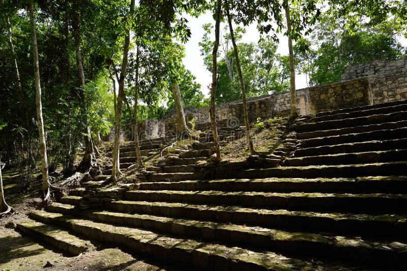 Calakmul. Archaeological site in the Mexican state of Campeche. Calakmul or Kalakmul is a Maya archaeological site in the Mexican state of Campeche, deep in the royalty free stock photo