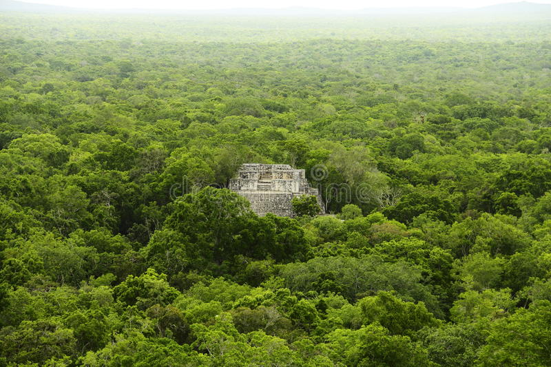 Calakmul IV stock images