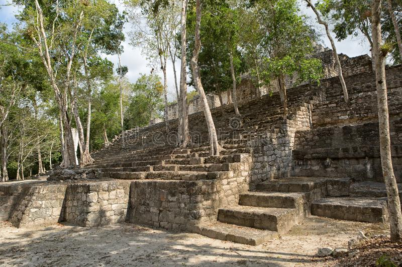 Calakmul mayan archeological site in Mexico. Trees growing out of the structures at Calakmul mayan archeological site in Mexico royalty free stock image