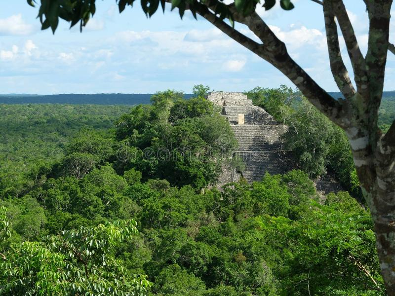 Calakmul Temple I royalty free stock images