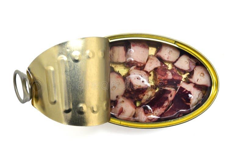 Calamar da lata isolado no branco imagens de stock
