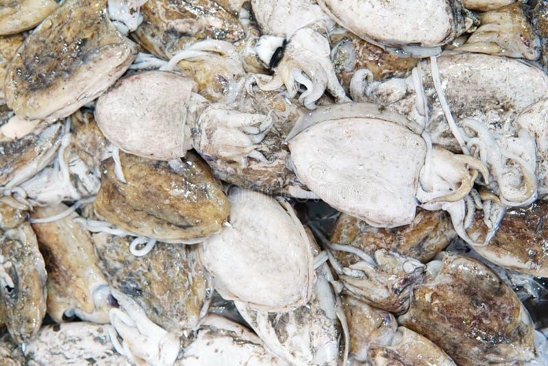 Calamar fresco sucio en estante en el mercado de pescados Pila de pequeño squi fotografía de archivo