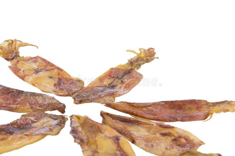 Calamar secado aislado en blanco imagen de archivo libre de regalías
