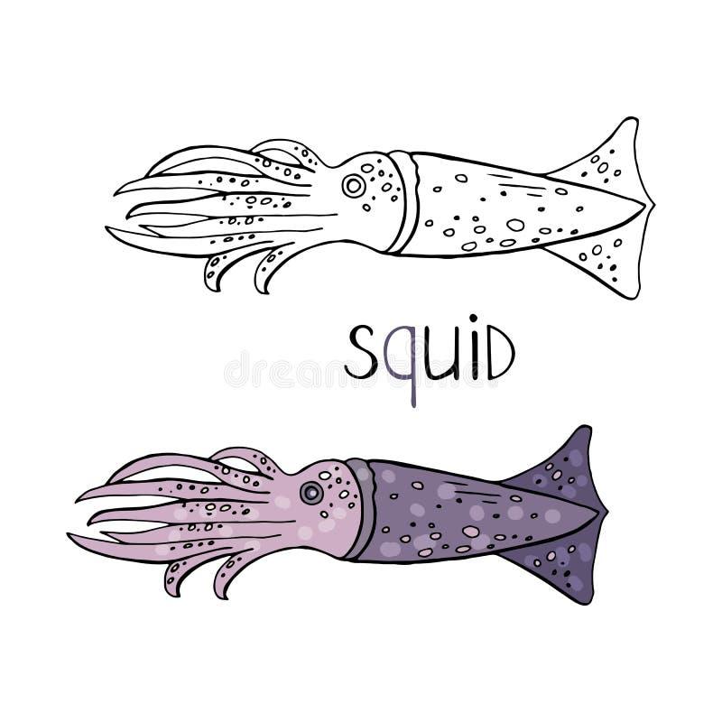 Calamar tirado mão preto e branco e cor isolada no fundo branco Calamar do vetor ilustração royalty free