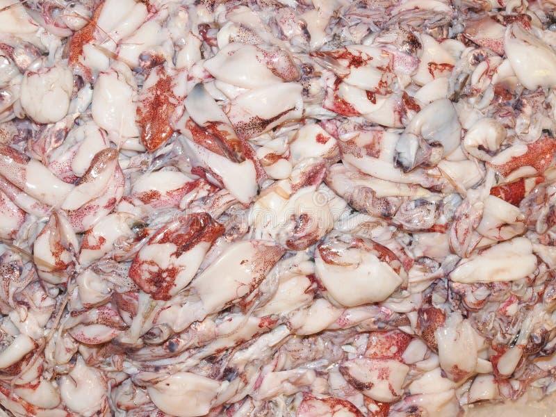 calamares fotografia de stock royalty free
