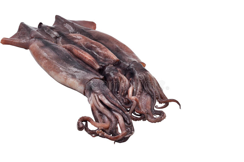 Calamares frescos e descascado isolado no fundo branco fotografia de stock royalty free