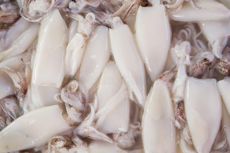 Calamaro immagini stock