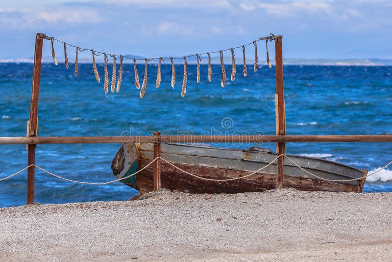 Calamaro di secchezza fotografia stock libera da diritti