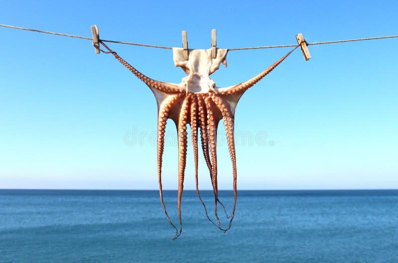 Calamaro di secchezza, mare nel fondo fotografia stock
