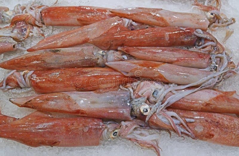 Calamaro fresco di loligo su ghiaccio tritato su esposizione da vendere al mercato ittico immagini stock libere da diritti