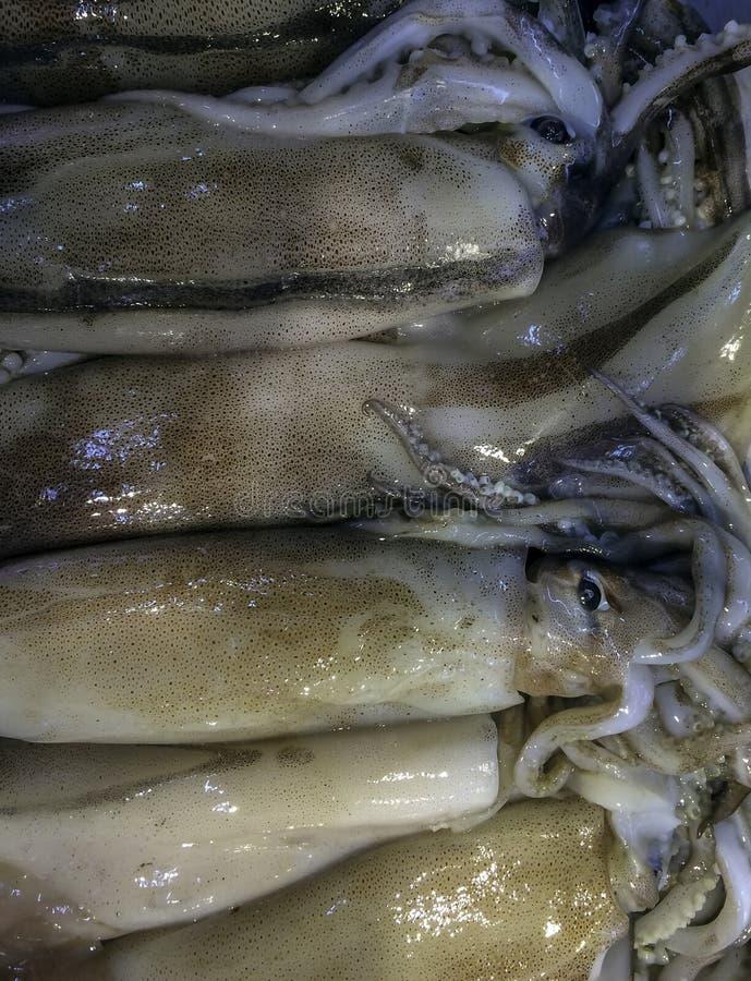 Calamaro fresco su ghiaccio nel mercato asiatico fotografia stock libera da diritti
