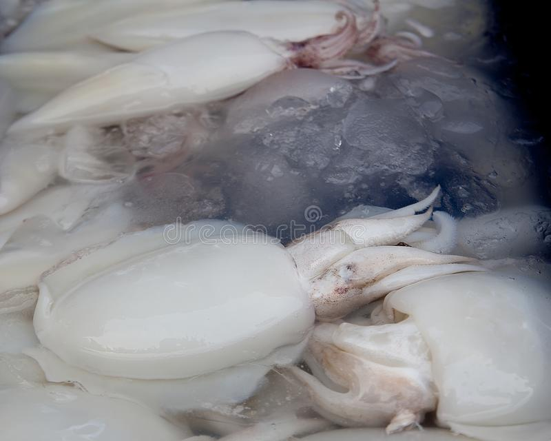 Calamaro fresco venduto nel mercato fotografie stock