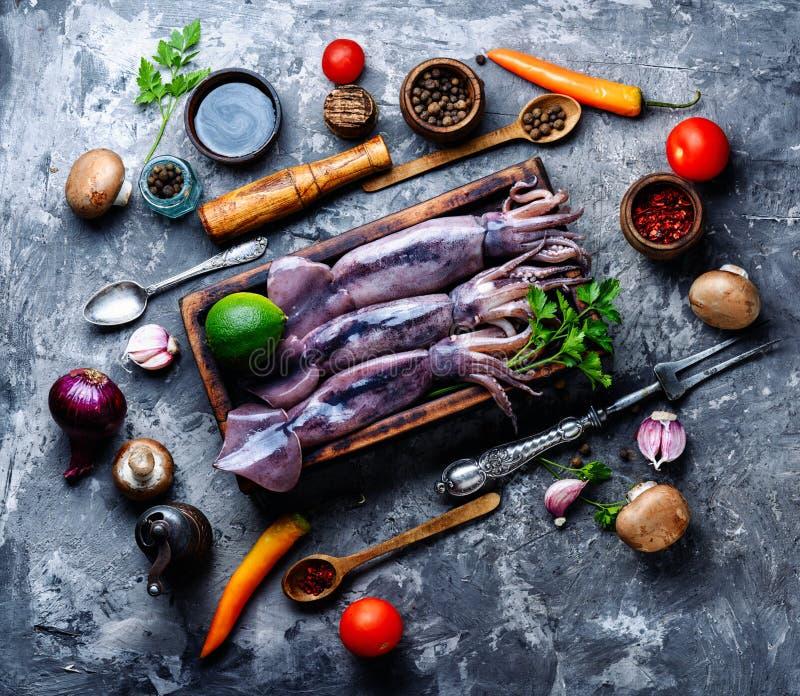 Calamaro grezzo fresco fotografia stock