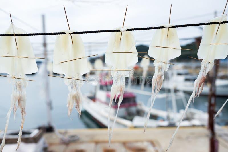 Calamaro secco d'attaccatura lungo la spiaggia immagine stock