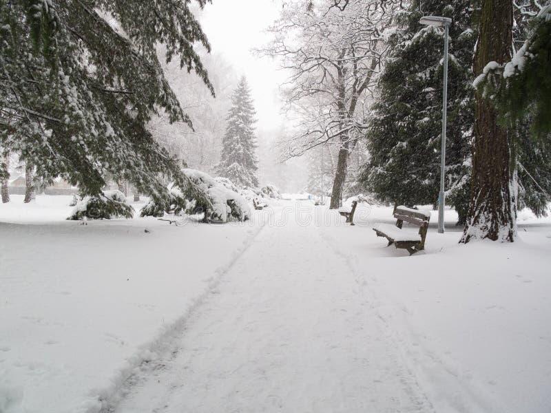 Calamidad de la nieve en parque imagenes de archivo